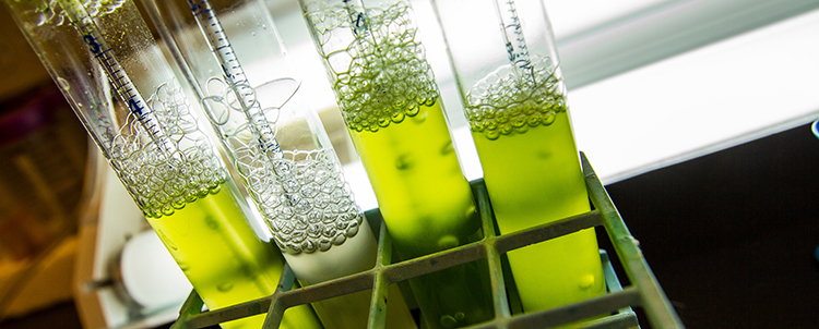 Photo of four test tubes with green, bubbling liquid inside the tubes