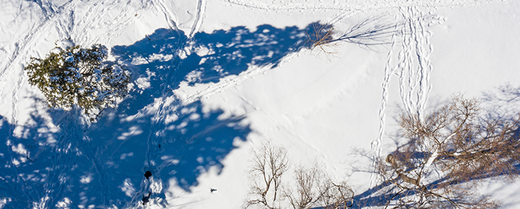 Photo of pine tree shadows in the snow on campus