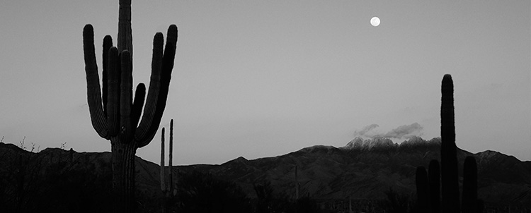Photo of saguaro cactuses in Arizona